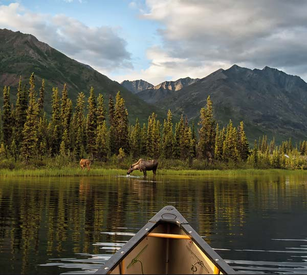 A VIEW TO DIE FOR: When you've spent days canoeing, portaging and drinking instant coffee, you've earned a view like this, of a cow moose and calf in placid water in the mountains. (Taken at McClusky Lake in the Yukon, in 2012.) Photo Peter Mather
