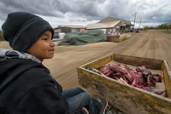 Hank Able, 10, helps deliver caribou to elders, single women, and those tied to their Old Crow office jobs. Photo Peter Mather