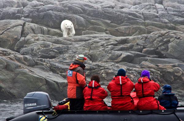 Make sure photographers don't become polar bear snacks... Jimmy Thomson
