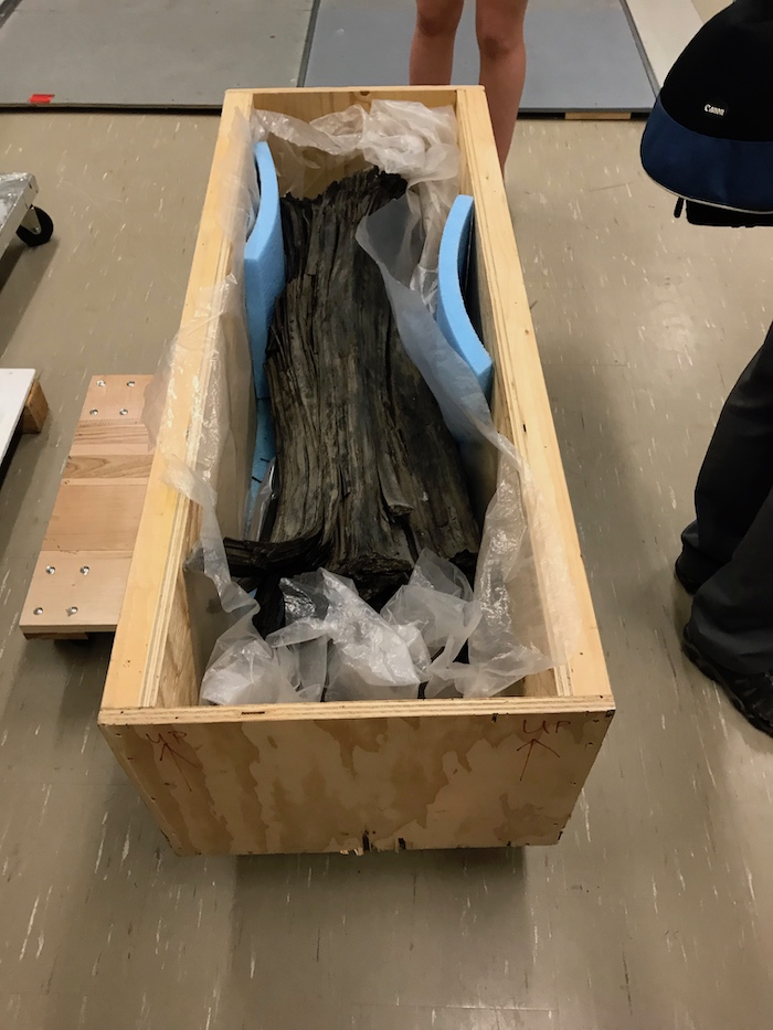 This 53-million-year-old tree trunk was pulled from the first pipe at the EKATI Diamond Mine.