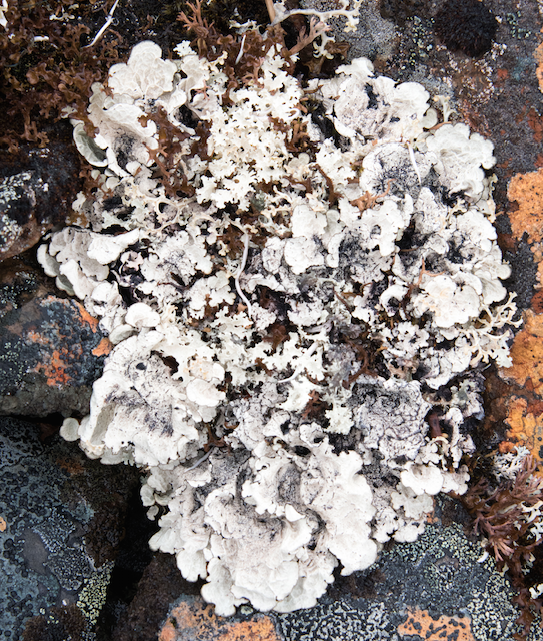 "Lichen spotted at a 2018 ""bioblitz"" in Tombstone Territorial Park. COURTESY Environment Yukon"