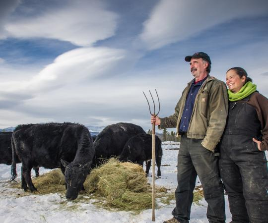 Made in the Yukon: Hay is a big cash crop in the Yukon; local producers can compete with southern farms because they don't have to pay major transport costs. Photo by Cathie Archbould