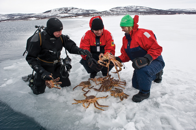 King crab safaris are one of the unique tourism offerings of Norway's northern region. Here, tourists pluck crabs out of the icy water in Kirkenes, on the Northern coast of the country. After the safari, they'll learn how to cook the crabs and get a chance to sample their catch by a cozy log fire. Photo by Terje Rakke/Nordic Life - visitnorway.com